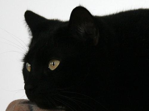Superstition-8
