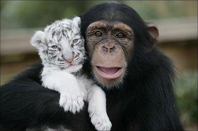 نظریه دلبستگی در حیوانات